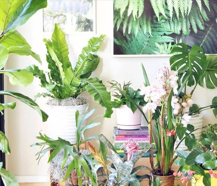 Cleaning Plants can do what for my home?